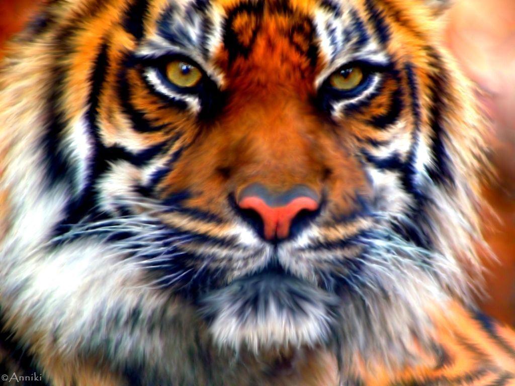 Tigres - Image dessin tigre ...