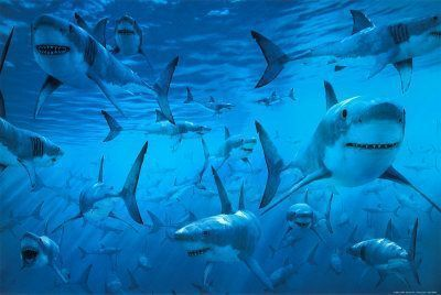requins squale shark fonds écrans