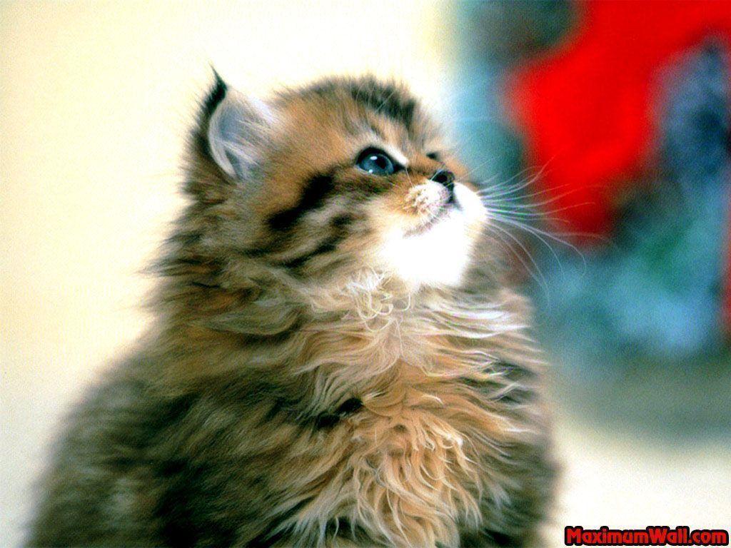 Chat trop mignon la maison des chats - Chat tout mignon ...